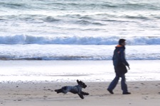 Person on a beach walking a dog