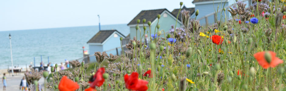 flowers and beach huts